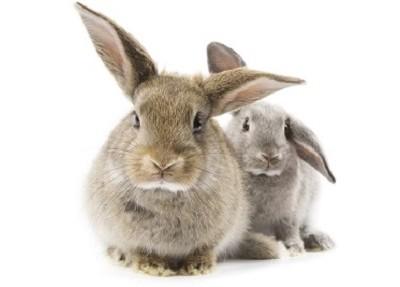 Conigli e Pollame